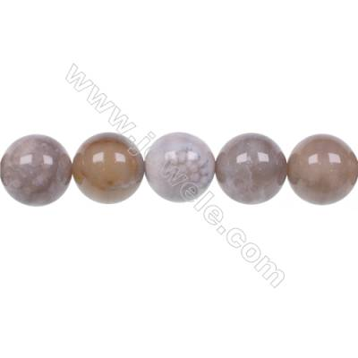 Natural fossil coral agate strand beads 12mm  hole 1.2mm  32 beads/strand  15~16""