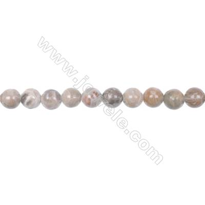 8mm fossil coral jasper round beads loose beads  hole 1mm  50 beads/strand 15~16""