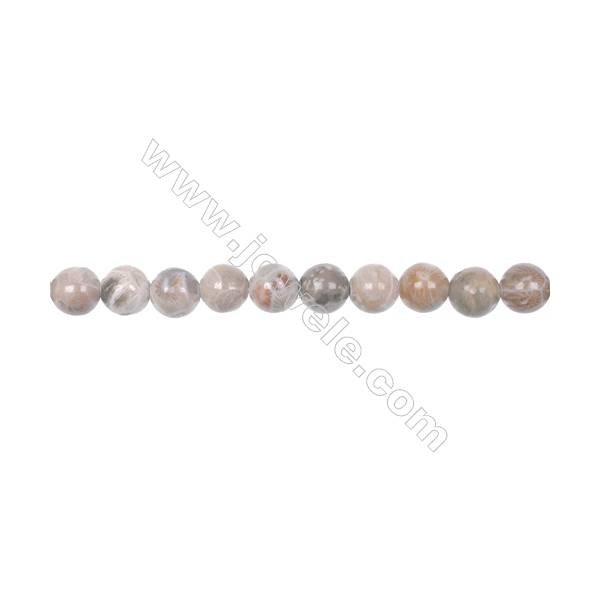 """8mm fossil coral jasper round beads loose beads  hole 1mm  50 beads/strand 15~16"""""""