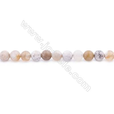 Frosted Fossil Coral Agate Beads Strand  Round  Diameter 6mm  hole 1mm  about 65 beads/strand 15~16""