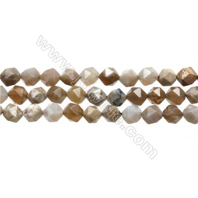 """Natural Ocean Fossil Coral Agate Gemstone Beads Strand, Star Cut Faceted, Size 8x8mm, Hole 0.8mm, 15~16""""/strand"""