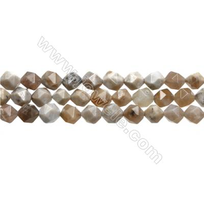 """Natural Ocean Fossil Coral Agate Gemstone Beads Strand, Star Cut Faceted, Size 10x10mm, Hole 1mm, 15~16""""/strand"""