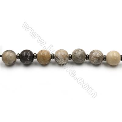 "Natural Coral Fossil Jasper Beads Strands, Large Round Beads, Size 24mm, Hole 4.5mm, 15~16""/strand, 7 beads"