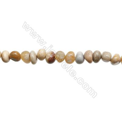 "Natural Fossil Coral Agate Beads Strands   Size 8~9x8~11mm  Hole: 1mm  15~16"" x 1strand"