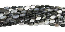 Grey shell